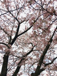 ☆~** 春がやってきました **~☆